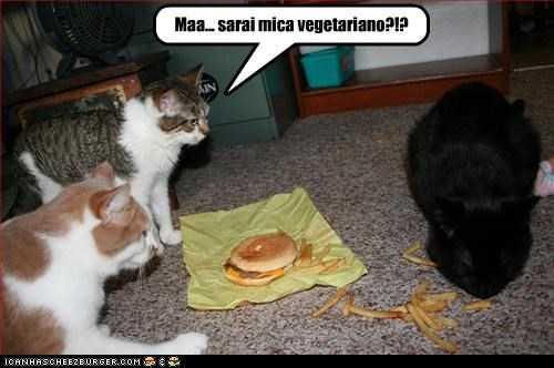 Cheezburger Image 3017098752