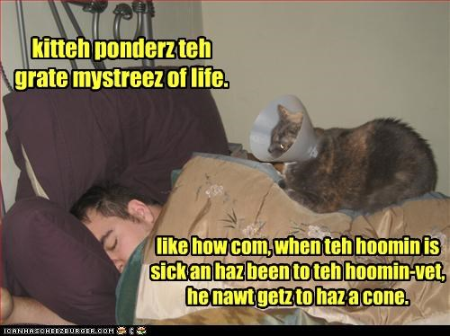 cone nap thinking vet - 3017706496