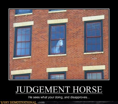 wtf,judgement,funny,horse