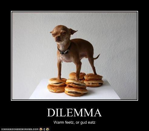 Cheezburger Image 3017953536