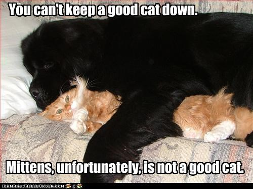You can't keep a good cat down. Mittens, unfortunately, is not a good cat.