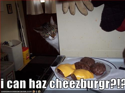 Cheezburger Image 3018594304
