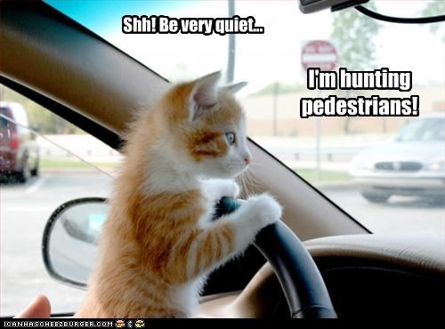 car cute driving hunting kitten - 3018890240