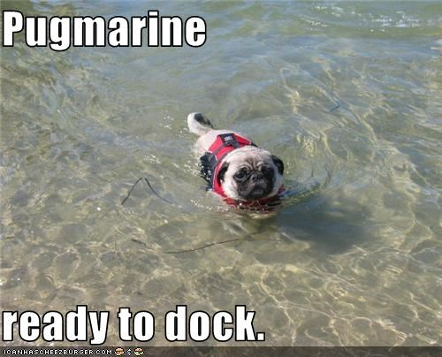 pug pugmarine submarine swim swimming water - 3020021248