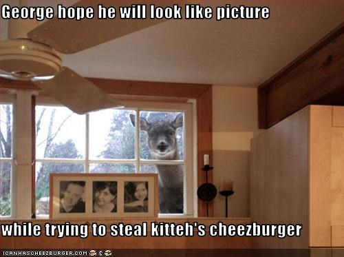 Cheezburger Image 3020099328