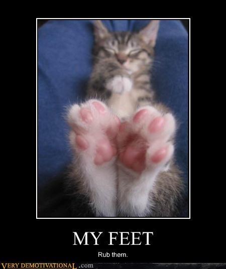cat needy foot rub - 3020424704