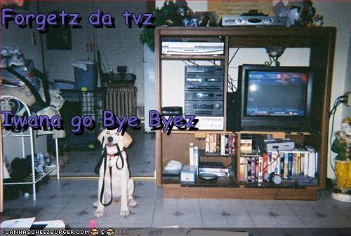 Cheezburger Image 3020623872