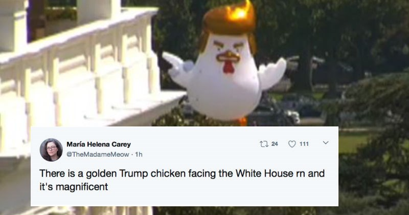 Someone is trolling President Trump with a giant inflatable chicken that's set up behind the White House.
