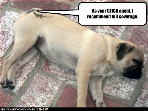 gecko GEICO insurance lizard pug sleeping - 3022691072