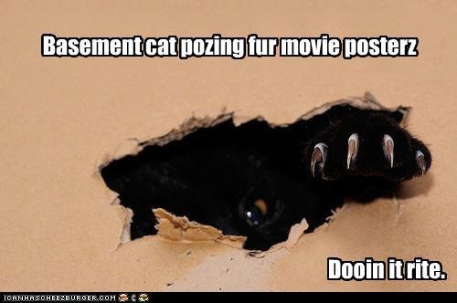 basement cat doin it rite movies - 3022719744
