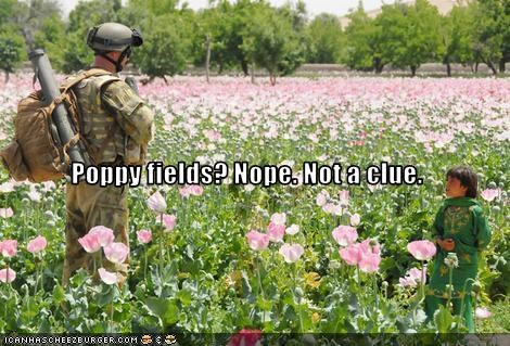 afghanistan child opium poppy fields soldier - 3022983168