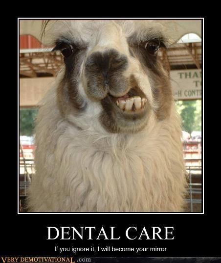 llama dentist teeth - 3023505664