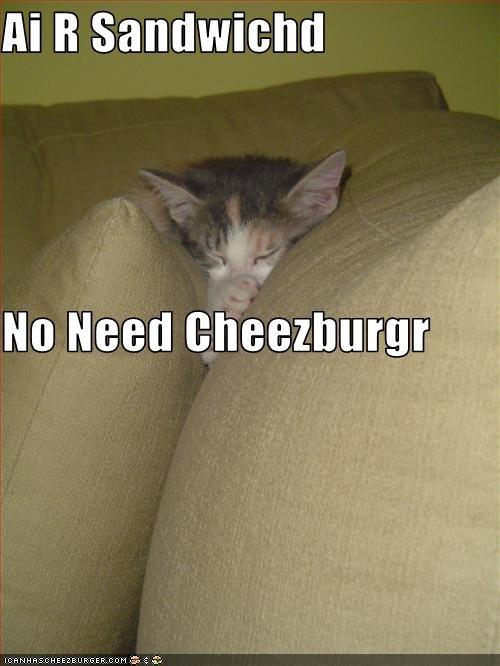 Cheezburger Image 3023886592