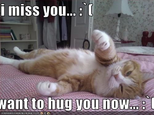 I Miss You I Want To Hug You Now Cheezburger Funny