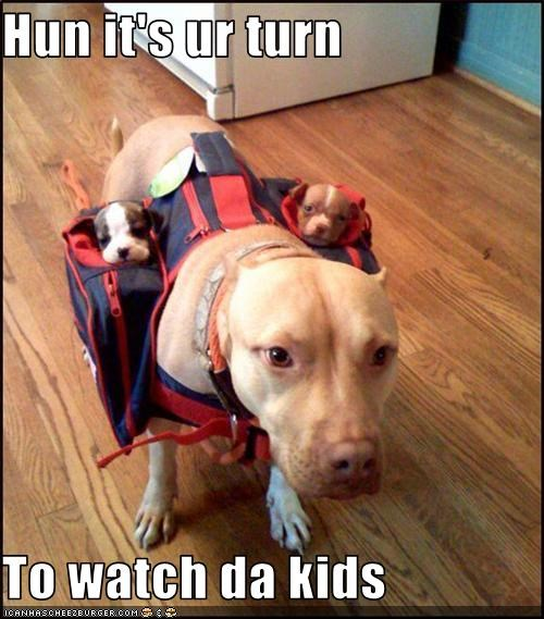 babysitting kids pitbull puppies watch