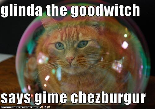 Cheezburger Image 3024588288
