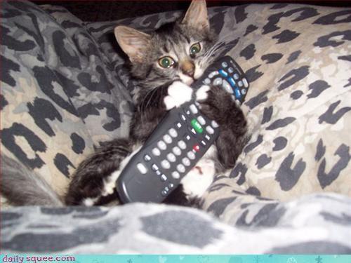 cat control freak kitten - 3025205248
