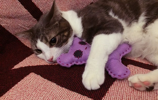 DIY tutorial for making your cat stuffed toy