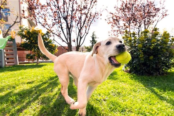 a cute photo of a dog catching a ball and running through the backyard looking happy - cover for an article about how dog owners of this generation are buying