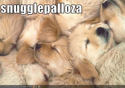 dogpile golden retriever pile puppies snuggle