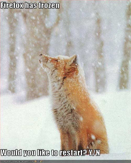 cold firefox frozen holiday lols 2010 lolfoxes outside snow - 3027932672