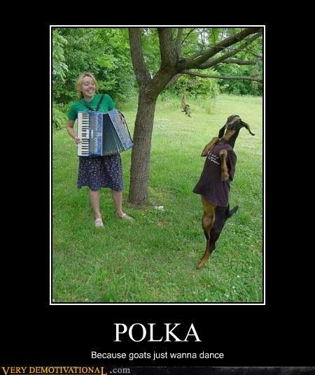 animals,dance,polka,Pure Awesome,wtf