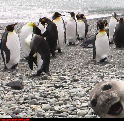 animal,Animal Bomb,awesome,crash,lol,Party,penguin,seal