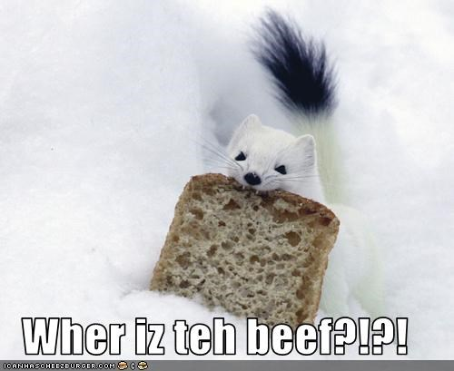 Cheezburger Image 3028912128
