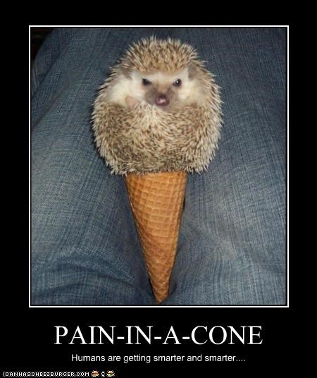 PAIN-IN-A-CONE Humans are getting smarter and smarter....