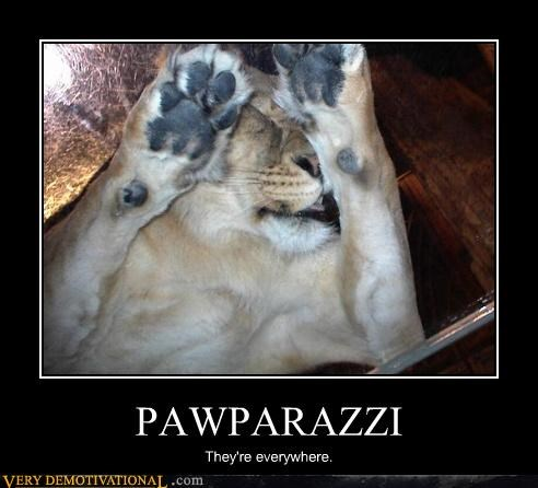 PAWPARAZZI They're everywhere.
