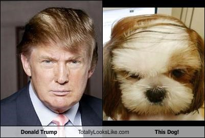 combover,dogs,donald trump,hair style