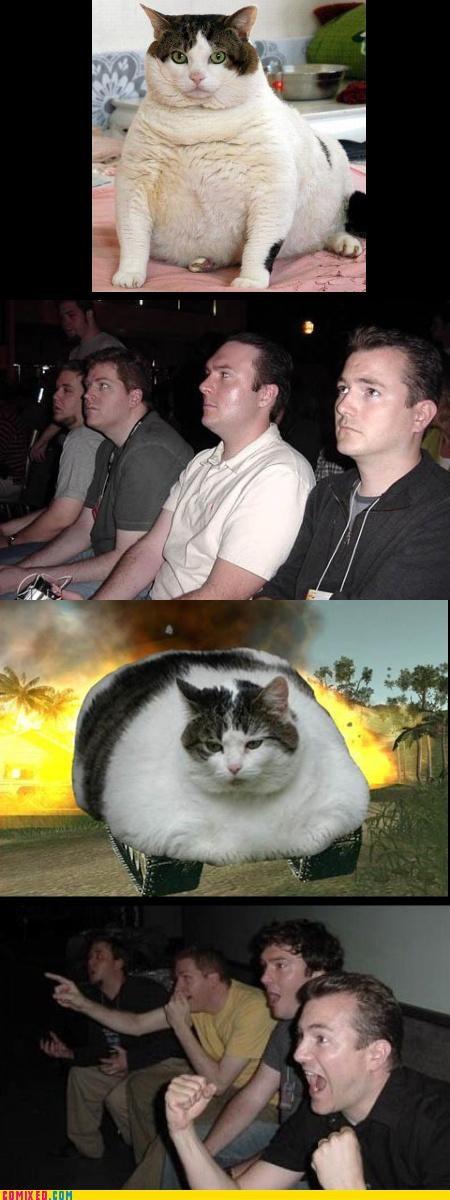 cat fat FTW kittehs tanks - 3030401024