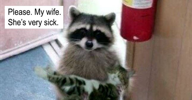 "Collection of funny memes about ""please. my wife. she's very sick."" a meme that started with a raccoon and a cat."