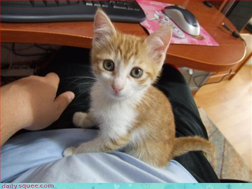 computer,kitten,orange