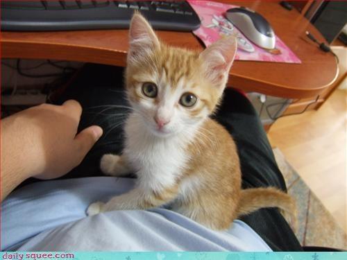 computer kitten orange - 3030534400