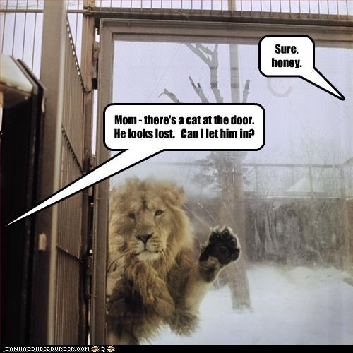 lollions,outside