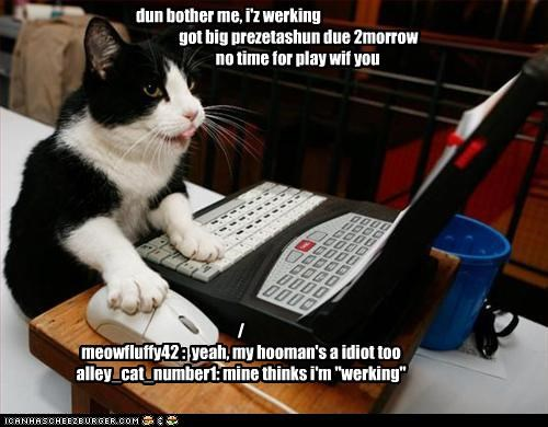 "dun bother me, i'z werking got big prezetashun due 2morrow no time for play wif you / meowfluffy42 : yeah, my hooman's a idiot too alley_cat_number1: mine thinks i'm ""werking"""