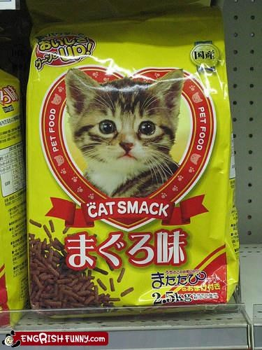 animals cat catnip