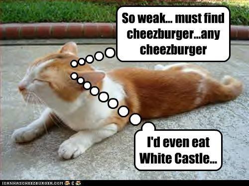 Cheezburger Image 3032410624