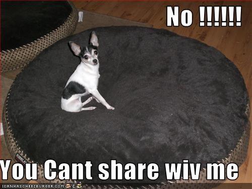 Cheezburger Image 3032670464