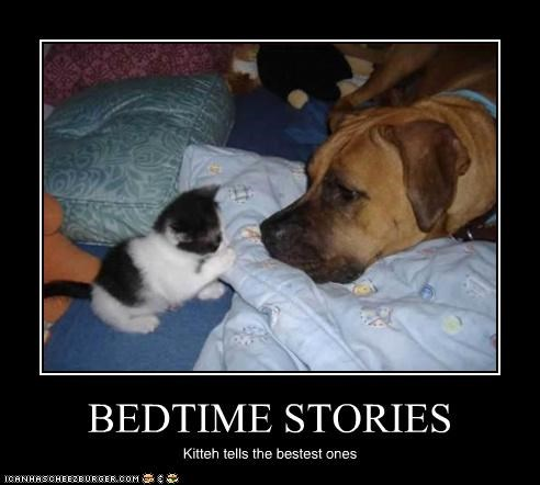 boxer,kitteh,listening,stories