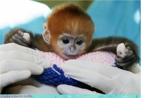 alien baby monkey - 3035825408
