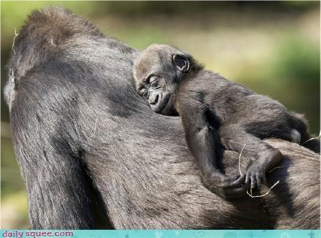 baby cute monkey - 3035827712