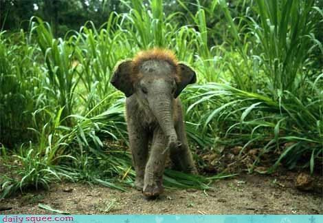 baby elephant personal ad - 3035831040