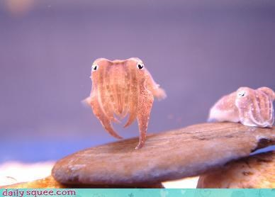 cephalopod,cuttlefish,so tiny
