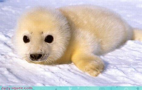 baby,cute,seal