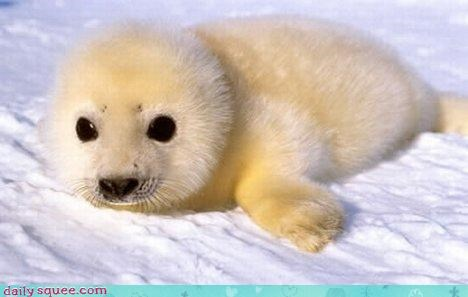 baby cute seal - 3035842304