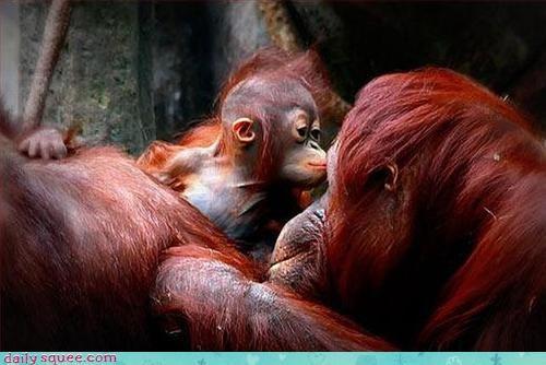 baby chimp monkey - 3035846400