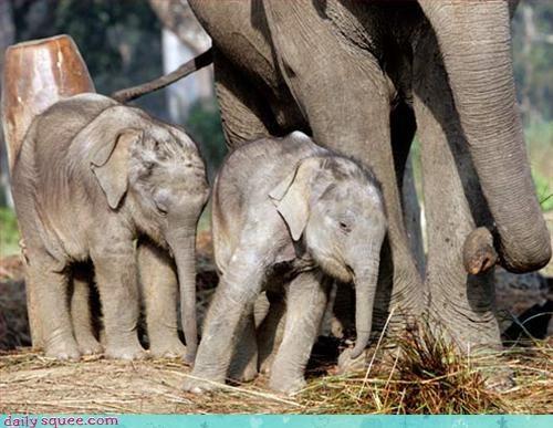 baby elephant sleepy - 3035853312