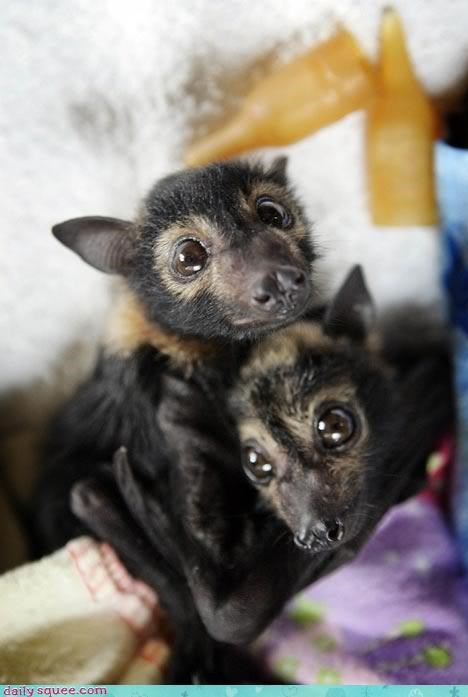 bats,BFFs,hugs